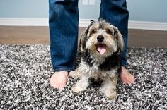 5 tips for a successful open house with pets