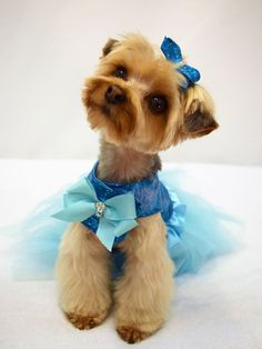 Tampa Pet Grooming offers Dog Grooming in Grande Style. We also make pet dresses.