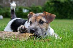 8 consejos para relajar a un perro nervioso