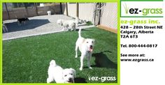 Pet safe artificial grass that is resistant to stains, soft to the touch and 100% safe for pets. Our synthetic grass is guaranteed for 10 years. Call EZ Grass today and enjoy beautiful, maintenance-free grass for years to come.