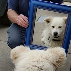 We should all look at ourselves in the mirror like this. Look in the mirror and say, damn I'm a beauty. A Husky, Look In The Mirror, All Dogs, Dog Lovers, That Look, Animals, Beauty, Animales, Animaux