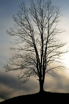 Silhoutte by rush.mee, via Flickr