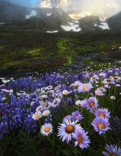 Ведьма из Диких земель. Цветы. Поле. Полевые цветы.