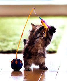 cute kittens   Tumblr