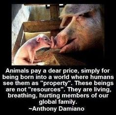 Non-human animals have the same right as human animals to enjoy their lives on this planet. Go vegan! No human needs to steal and kill from others to survive. Authentic veganism teaches reverence for ALL life. Amazing Animals, Animals Beautiful, Cute Animals, Farm Animals, Beautiful People, Mon Combat, Vegan Facts, Why Vegan, Vegan Raw