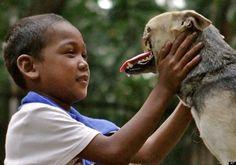 Kabang, a dog in the Phillipines, had his snout and upper jaw sheared off by a motorcycle.