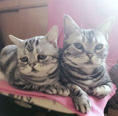 Luhu, a szomorú cica   Forrás: boredpanda.com