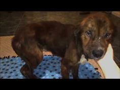 Nobody Wanted To Adopt A Badly Hurt Puppy, But Then ... - http://www.dogisto.com/nobody-wanted-to-adopt-a-badly-hurt-puppy-but-then/