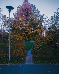 #tree #autumn #park #colors #city #walk #photography #october