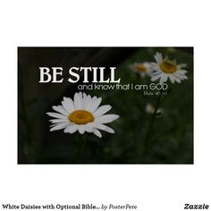 White Daisies with Optional Bible Verse