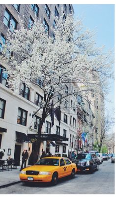 blooms in the city
