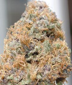 Cannabis Marijuana Indica Sativa Hybrid Kush Hemp Pot Ganja Herb Weed - BLAZE IT!
