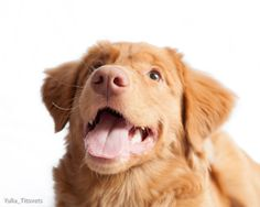 Happy Toller face