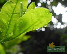 Dancing leaf in rain  Photo Credits: Saikat Das    http://www.dreamwanderlust.com/rainy-days.php