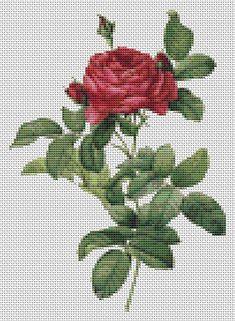 Rosa Gallica Pontiana Counted Cross Stitch by TheArtofCrossStitch, $8.99