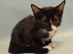SUPER URGENT CODE RED - PLS RESCUE THIS BABY AND 2 SIBS IN MANTHATTAN...EUTH DATE 8/21 STATUS UNK 8/22...KEEP SHARING. RESCUE ONLY.   HORTENSIA  to be destroyed  08-21-16