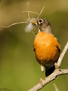 How to Offer Bird-Nesting Materials in Your Garden : The National ...
