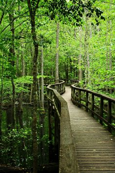visitheworld:  The way through the marshes, Congaree National Park / USA (by wsweet321).
