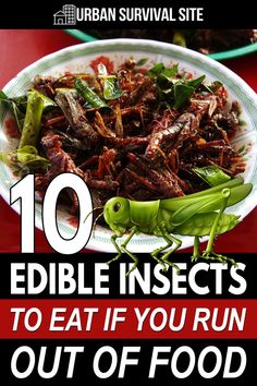 More than 2 billion people around the world eat edible insects as a regular part of their diet. You can, too. Urban Survival, Survival Life, Survival Food, Emergency Preparedness, Survival Skills, Edible Insects, Run Out, Shtf