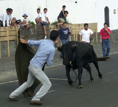 Terceria AzoresYoung man shows off his prowess in bullfighting, Touradas à Corda, Azores, Portugal... News Photo 165001612