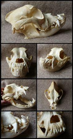 Boxer Skull by CabinetCuriosities on DeviantArt