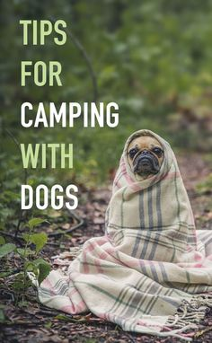 Tips for camping with dogs on your next adventure. Take your pups, hiking, exploring, and camping, just make sure to keep them safe. (Camping Ideas With Dogs) Camping Hacks, Camping Bedarf, Camping With Kids, Outdoor Camping, Pack For Camping, Backpacking, Couples Camping, Camping Checklist, Hiking Dogs