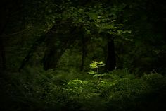 Light up the darkness by David Brand on 500px