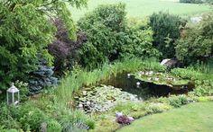 Teich des Schaugarten Hamilton in Deutsch Wagram