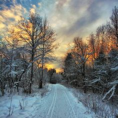 ***Forest road in winter (no location given) by Aleksandr Pavlovich❄️