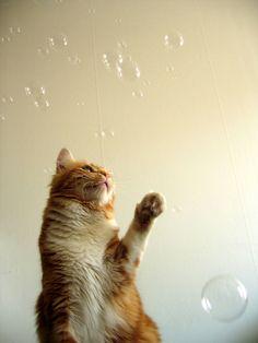 Peach against the bubbles.jpg