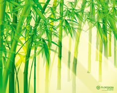 Bamboo HD Wallpapers Backgrounds Wallpaper