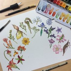 Wildflower Rainbow Botanical Watercolor Art Print by Laura Poulette of Meadow House Studio