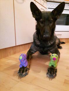 """Hunde Foto: Tanja und Shakira vom Gsiberger - """" Nachdenklich """" Hier Dein Bild hochladen: http://ichliebehunde.com/hund-des-tages  #hund #hunde #hundebild #hundebilder #dog #dogs #dogfun  #dogpic #dogpictures"""