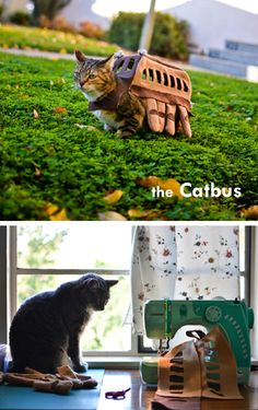 A cat bus costume for a cat!!  From Totoro.