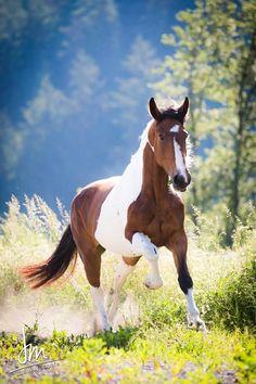 Paint horse.