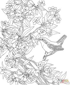 Wren and Yellow Jessamine South Carolina coloring page | SuperColoring.com