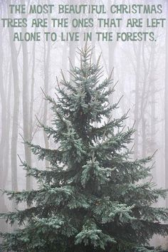 The most beautiful christmas trees are the ones that are left to live in the forests.