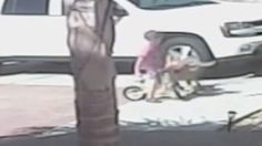 CCTV footage captures moment family cat saves boy from dog attack