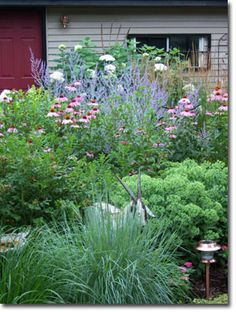 Late summer Minnesota garden...the basic plants look amazing here, coneflower, liatris, Autum Joy sedum, bergenia, salvia with Russian Sage, Goldsturm Rudbeckia and Karl Forerster grass in the back.