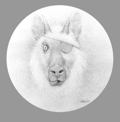 "Travis Louie,Bandit, 2014, graphite on paper, 9"" round at William Baczek Fine Arts www.wbfinearts.com"