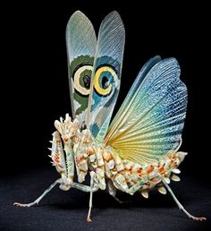 """An adult African Spiny Flower Mantis ~ Miks' Pics """"Arachnids and Insects l"""" board @ http://www.pinterest.com/msmgish/arachnids-and-insects-l/"""