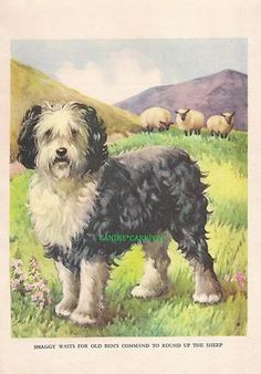 Old English Sheepdog and Sheep 1930s Childrens Vintage Art Print by A E Kennedy | eBay