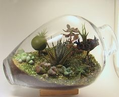 More Gorgeous Air Plant Displays