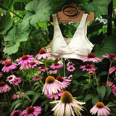 eco friendly bras & intimates // MAJAMAS // comfy organic cotton natural ivory bra for everyday, low-impact workout or yoga // be the change & learn to love ecofashion intimates & USA MADE // wear beautiful clothing that doesn't harm our beautiful planet
