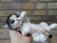 (Kitten ) Handmade needle felting doll (Part 2) ...Seven poses
