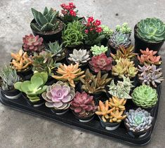 Shop online for all your Cactus and Succulent must haves. Our selection of decorative planters will help you add plenty of personality to your space. Types Of Succulents, Growing Succulents, Cacti And Succulents, Planting Succulents, Cactus Plants, Garden Plants, House Plants, Suculent Plants, Topiary Trees