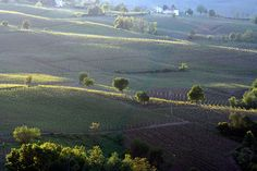 Vineyards Oltrepo Pavese by duepadroni, via Flickr