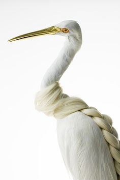 By Karley Feaver Egretta Garzetta Plaitiata 2013 Mixed Media Taxidermy Egret, synthetic hair, 24k gold leaf, wood lacquer paint