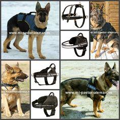 Propietarios de los #cachorros de #raza #Pastor #alemán, les presentamos #arneses de nylon y cuero, apropiados para #paseos, #adiestramiento y preparación para futuro #trabajo del #perro. Desde 26 euros. Siga el enlace http://www.mi-pastor-aleman.es/index.php/resultados-de-la-busqueda/arneses/?custom_f_10[0]=61726e65736573207061726120636163686f72726f73