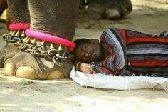 पयर और वशवस क अनठ सगम  #elephant #man #trust #love #life #bhopali2much #b2m #facebook #whatsapp #twitter #Instagram #people #marketing